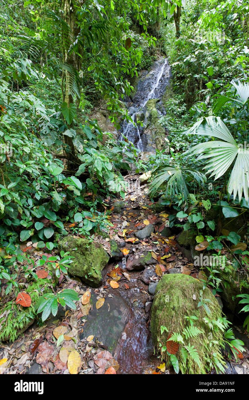 Foresta pluviale tropicale, Costa Rica Immagini Stock