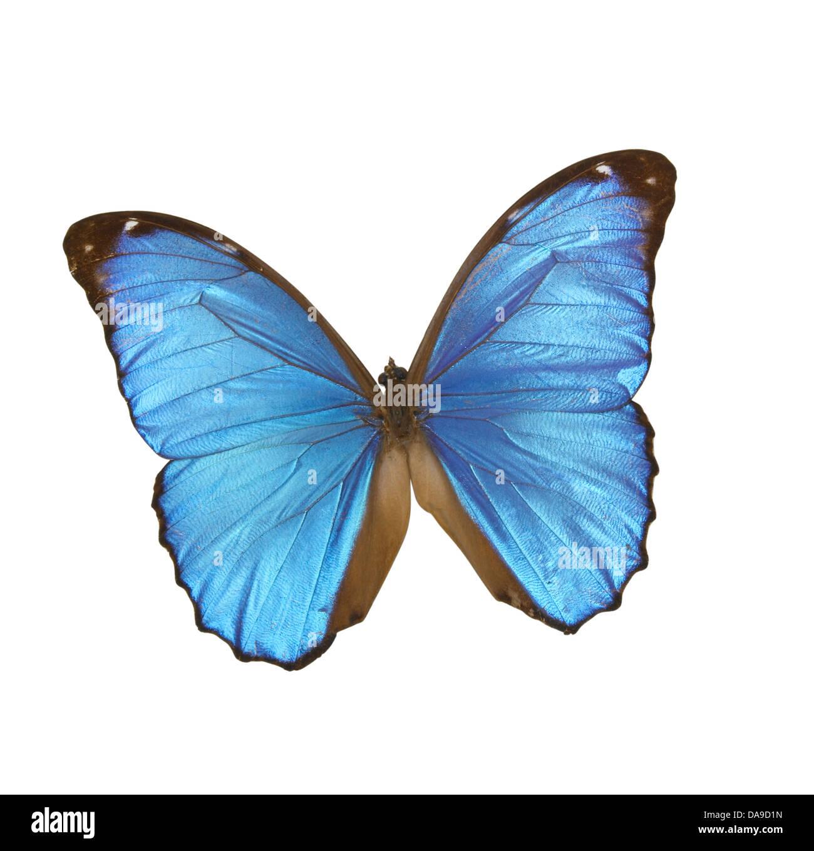 Farfalla blu Immagini Stock