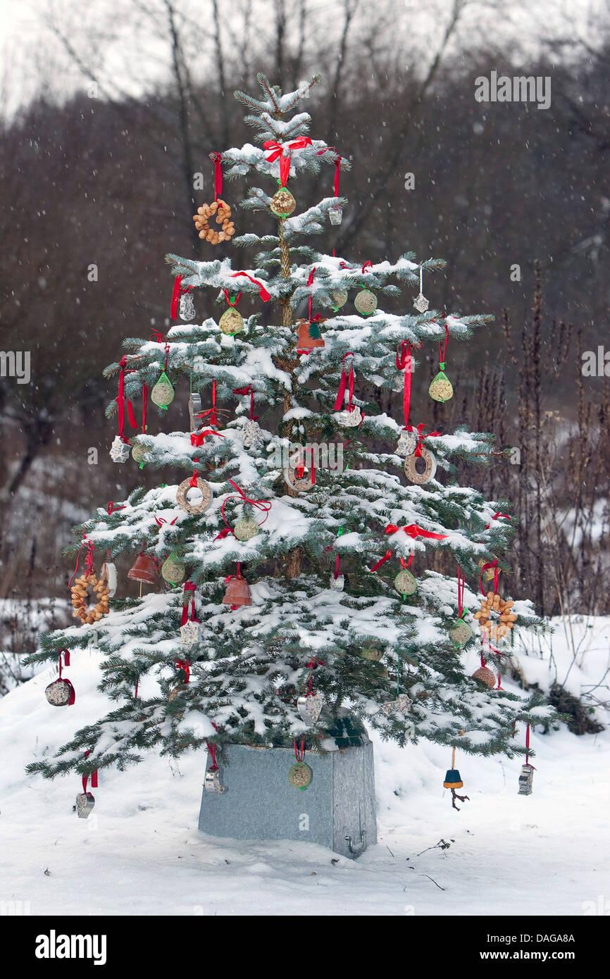 Albero di natale in una coperta di neve giardino ornato con grasso di palle per gli uccelli, Germania Immagini Stock