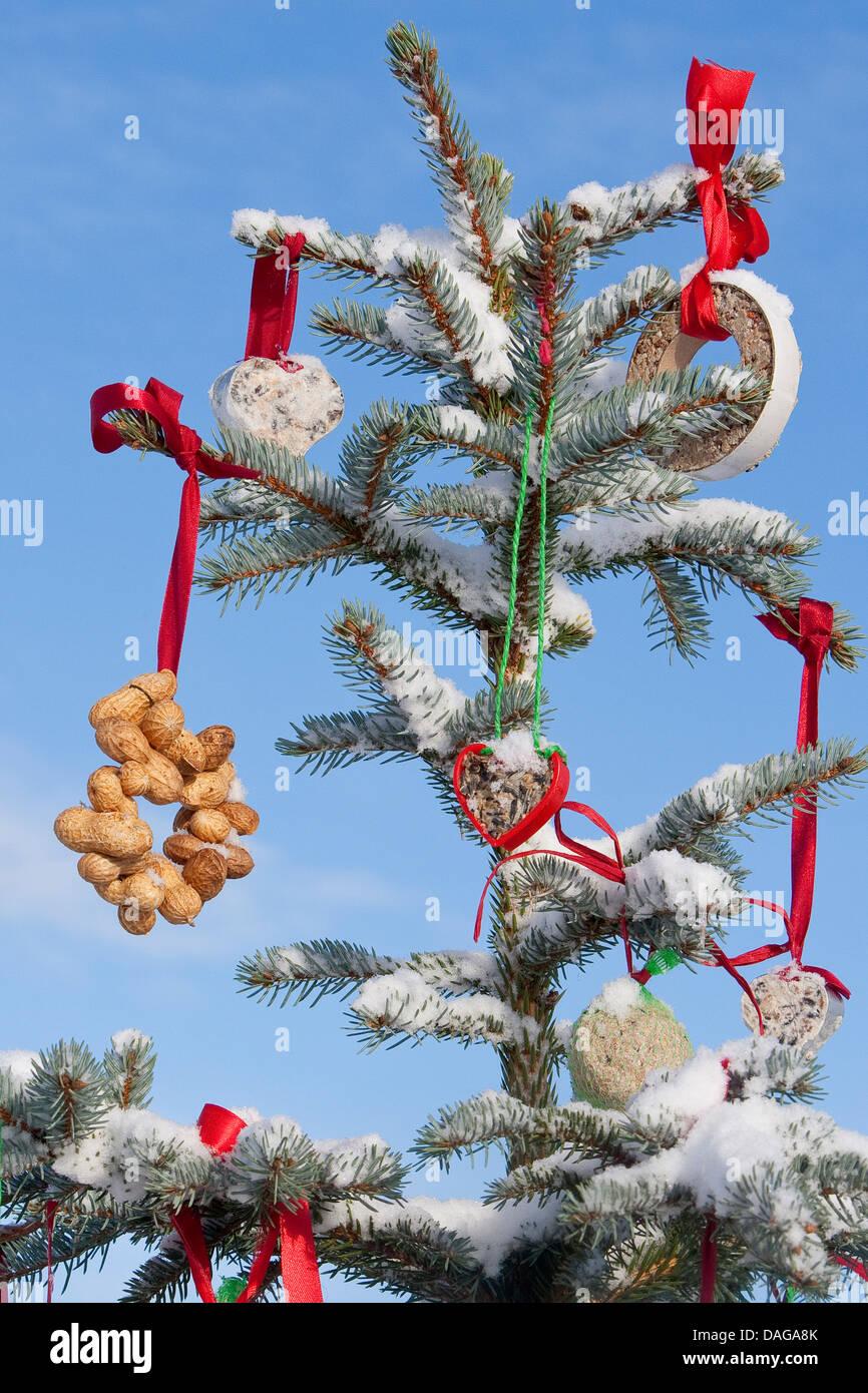 Albero di natale in una coperta di neve giardino ornato con sfere di grasso e altri alimenti per uccelli, Germania Immagini Stock