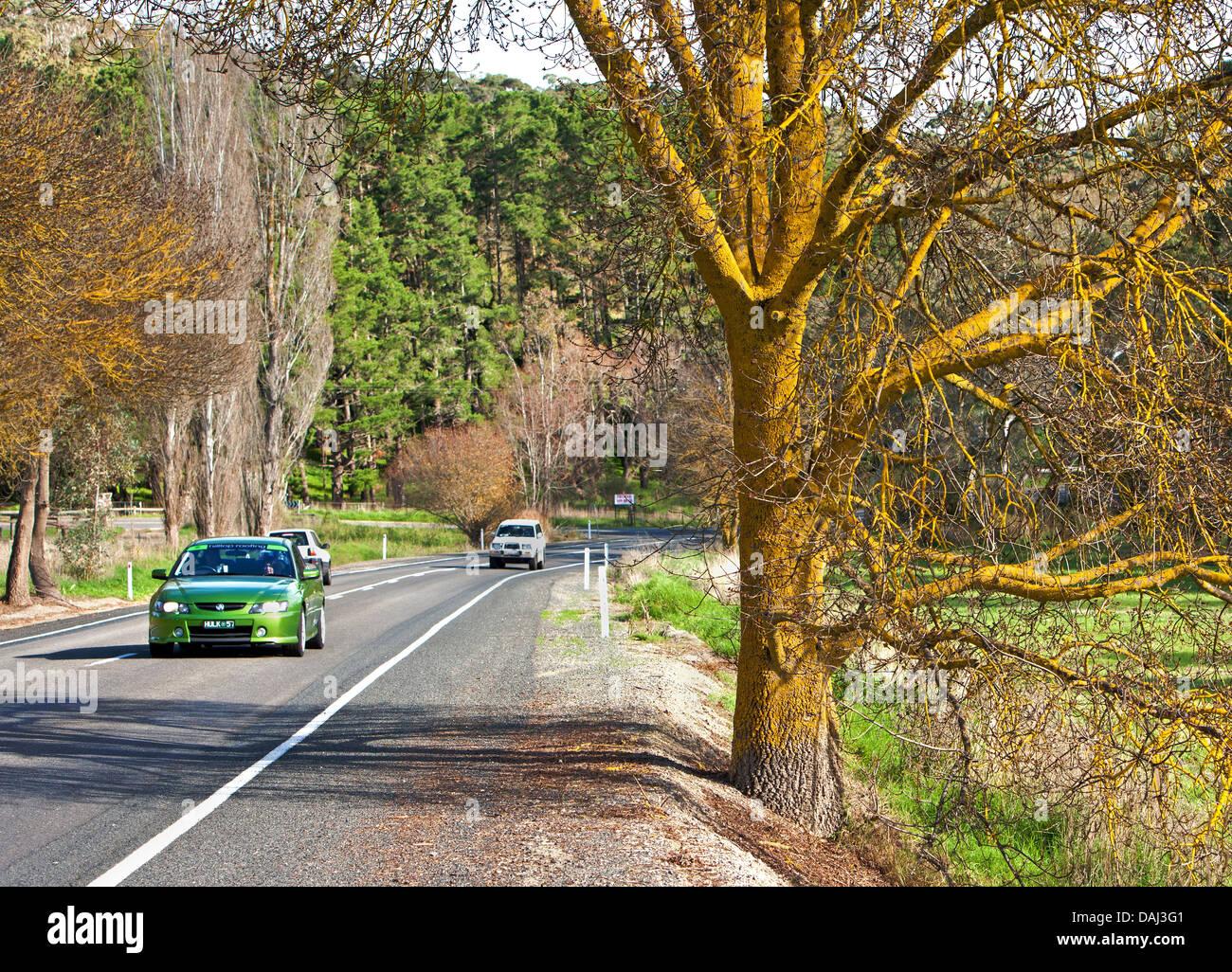 Alberi giallo rurale lichen tronco rami vetture su strada lato paese Fleurieu Peninsula South Australia Australian Immagini Stock