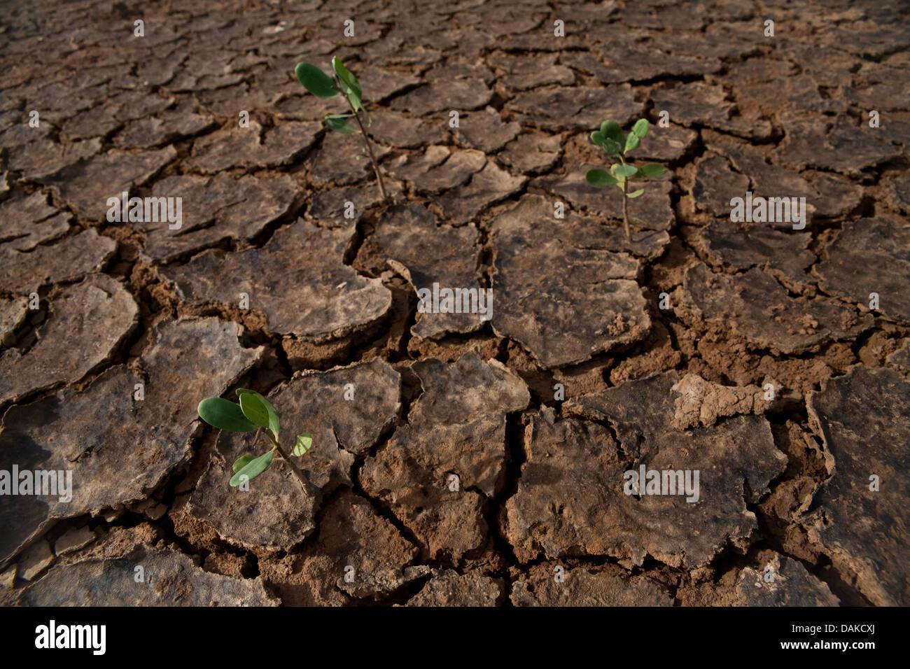 Il paesaggio del deserto in Sarigua National Park, Herrera provincia, Repubblica di Panama. Immagini Stock