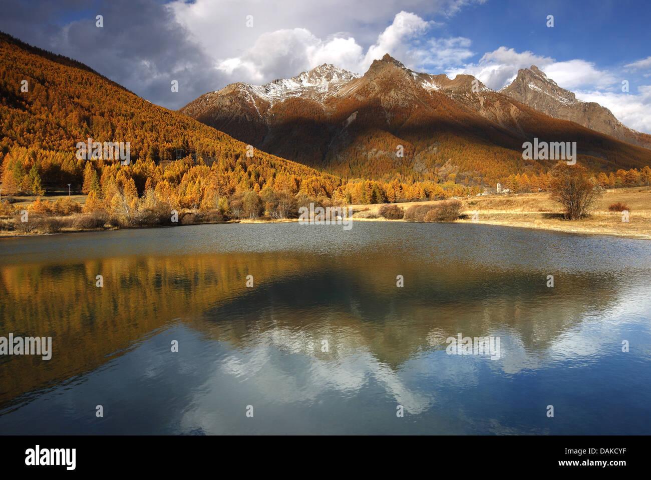 Larice comune, EUROPEE Larice (Larix decidua, Larix europaea), Valle de la Guisane; Montagne des Agnelli, Francia Immagini Stock