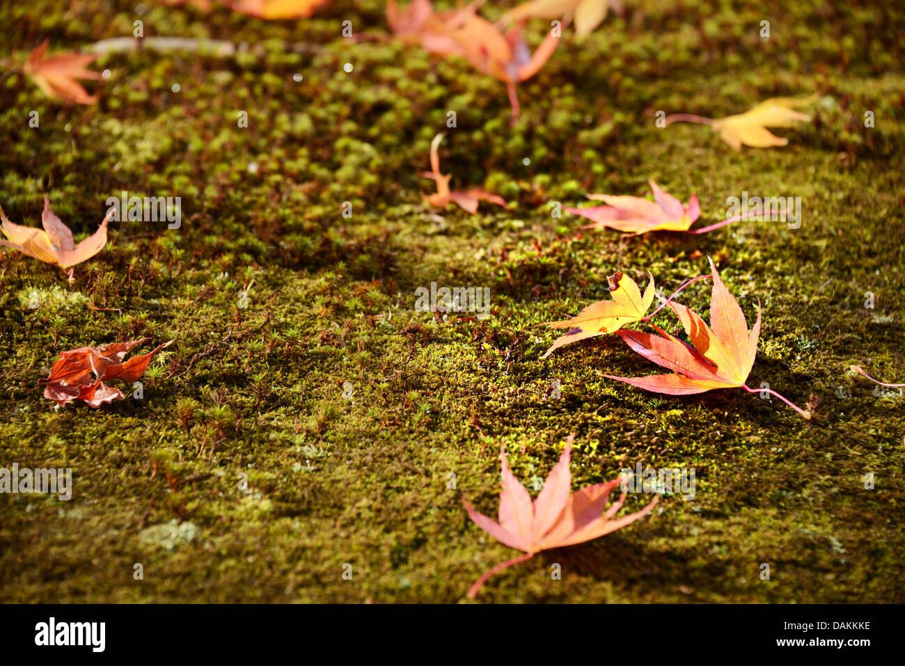 Cadono le foglie che indica il cambiamento stagionale a Kyoto, in Giappone. Immagini Stock