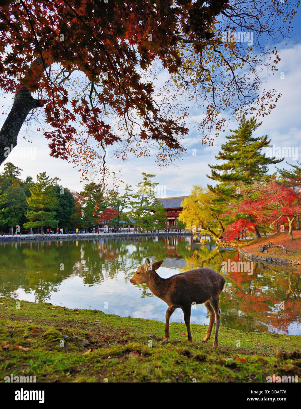 Cervi al Tempio di Todai-ji tempio motivi a Nara, Giappone. Immagini Stock
