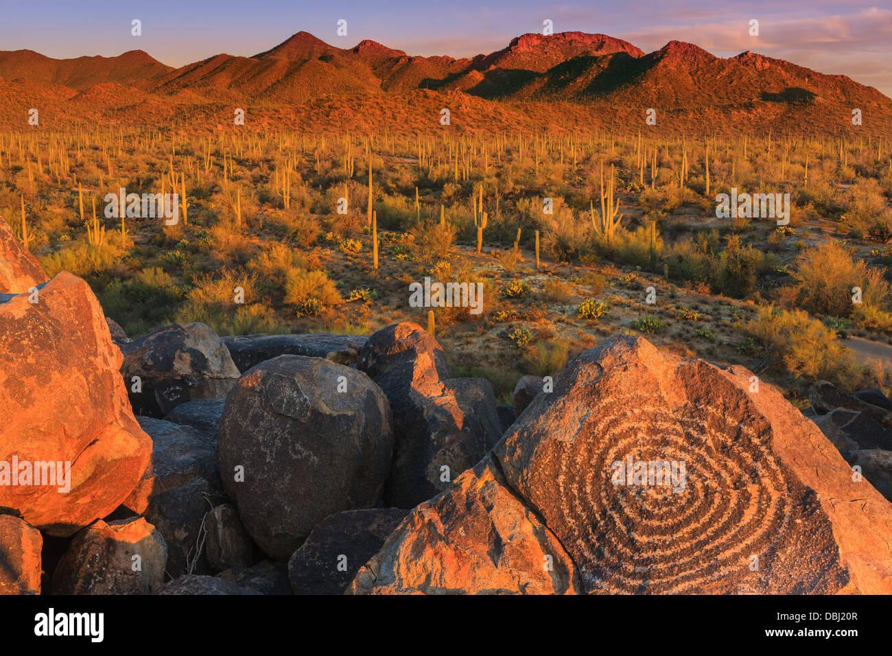 Parco nazionale del Saguaro da Signal Hill, Arizona, Stati Uniti d'America Immagini Stock