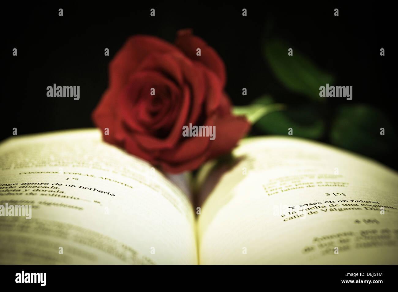Libro Aperto Con Una Rosa Rossa Su Sfondo Nero Still Life Poetico