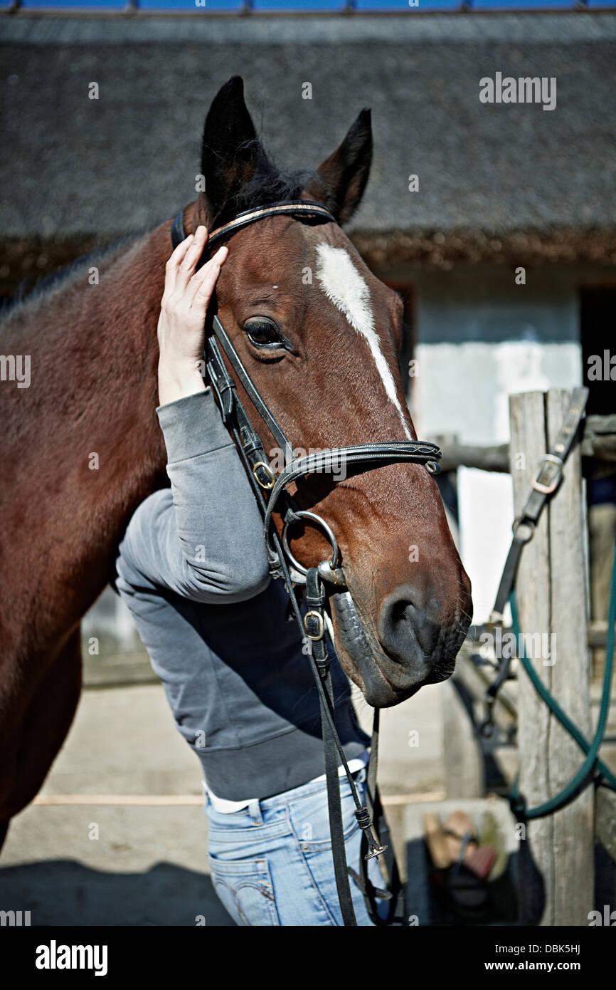 Persona in possesso della testa di cavallo, Close-up, Baranja, Croazia, Europa Immagini Stock