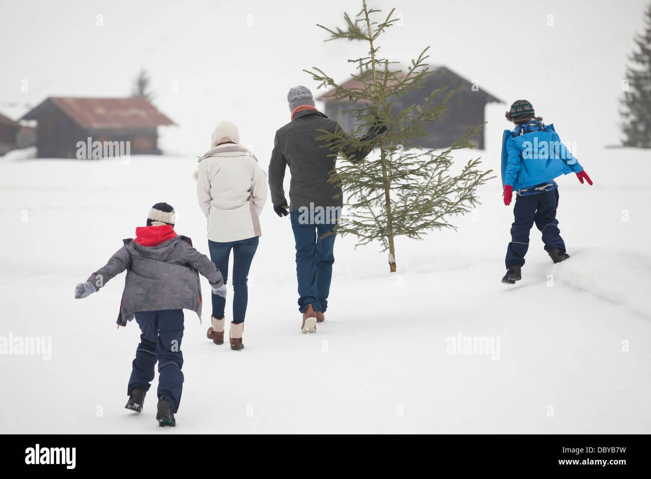 Famiglia fresco che porta l'albero di Natale in campo nevoso Immagini Stock