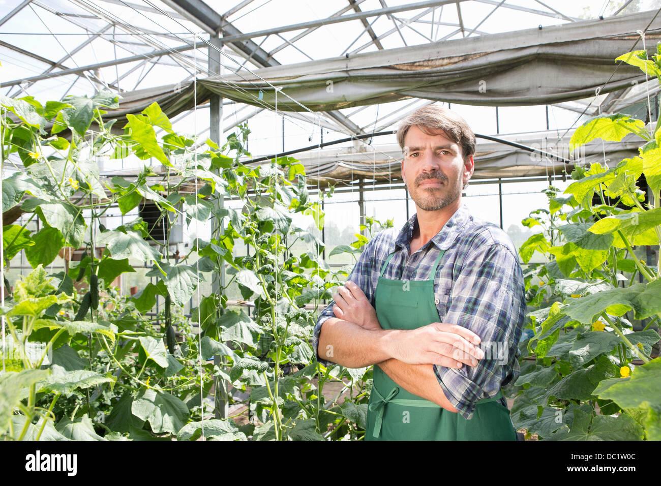 Ritratto di agricoltore biologico accanto a piante di cetriolo in polytunnel Immagini Stock