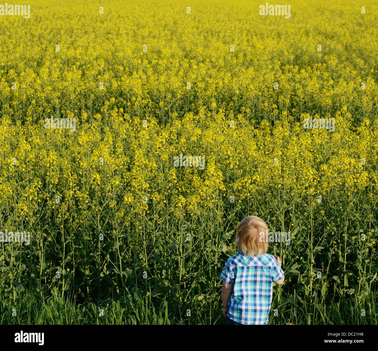 Ragazzo che guarda al campo, ad alto angolo di visione Immagini Stock