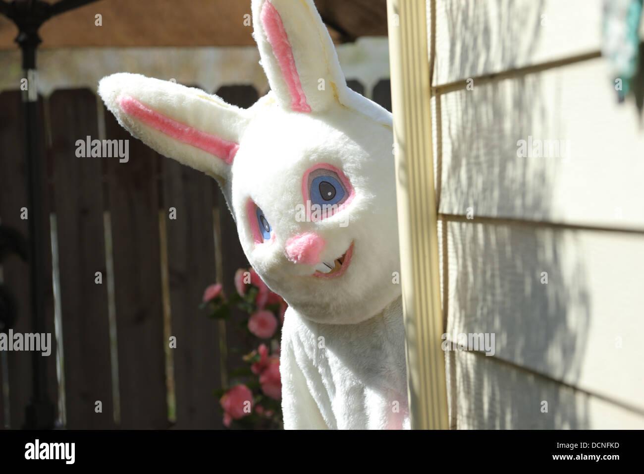 Coniglietto di pasqua picchi fuori da dietro casa Foto Stock