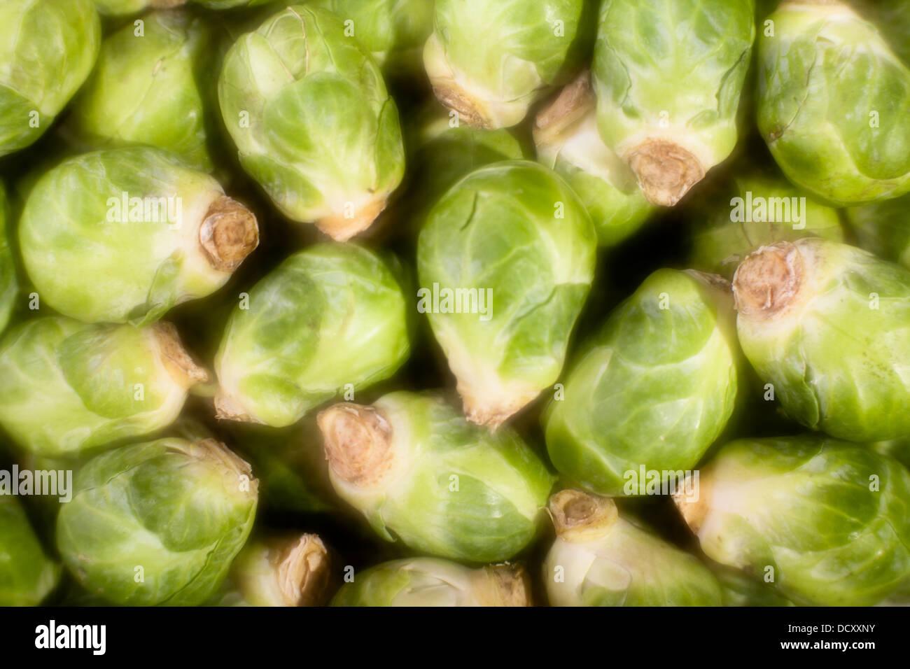 I CAVOLI DI BRUXELLES molti closeup background soft focus Immagini Stock