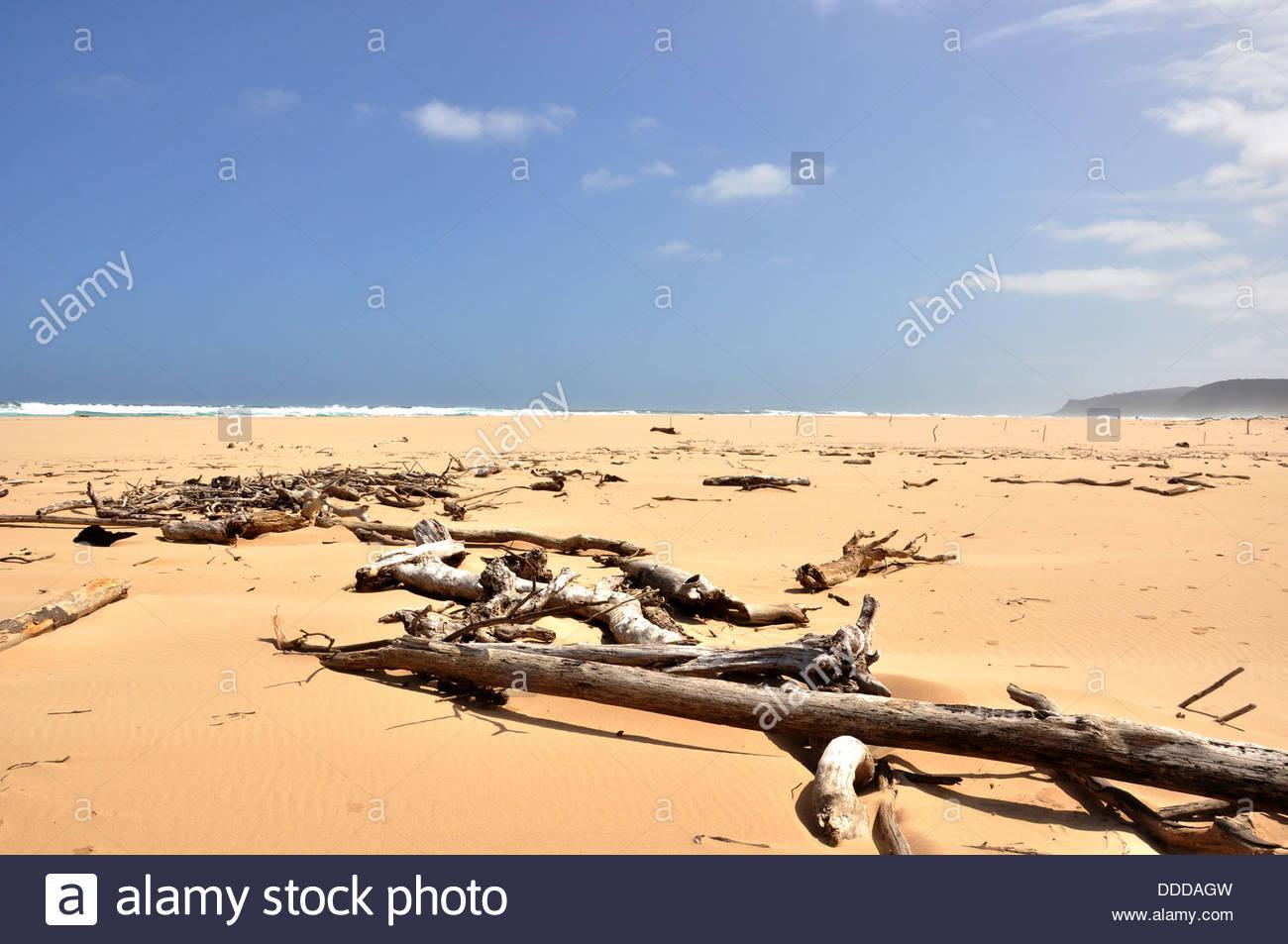 Driftwood sulla spiaggia di La natura della Valle, Sud Africa. Immagini Stock