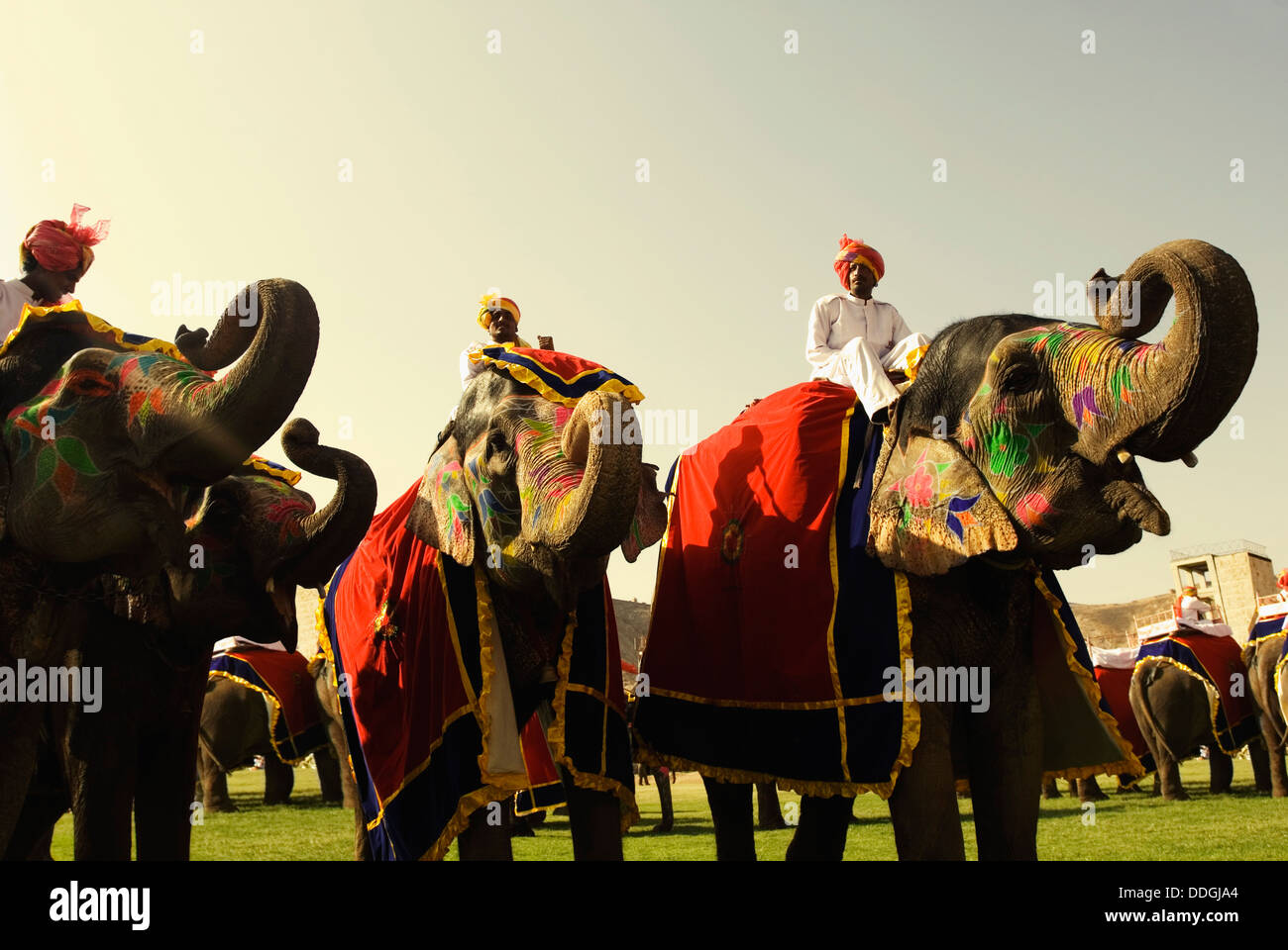 Mahouts con Elefanti Elefante in Festival, Jaipur, Rajasthan, India Foto Stock