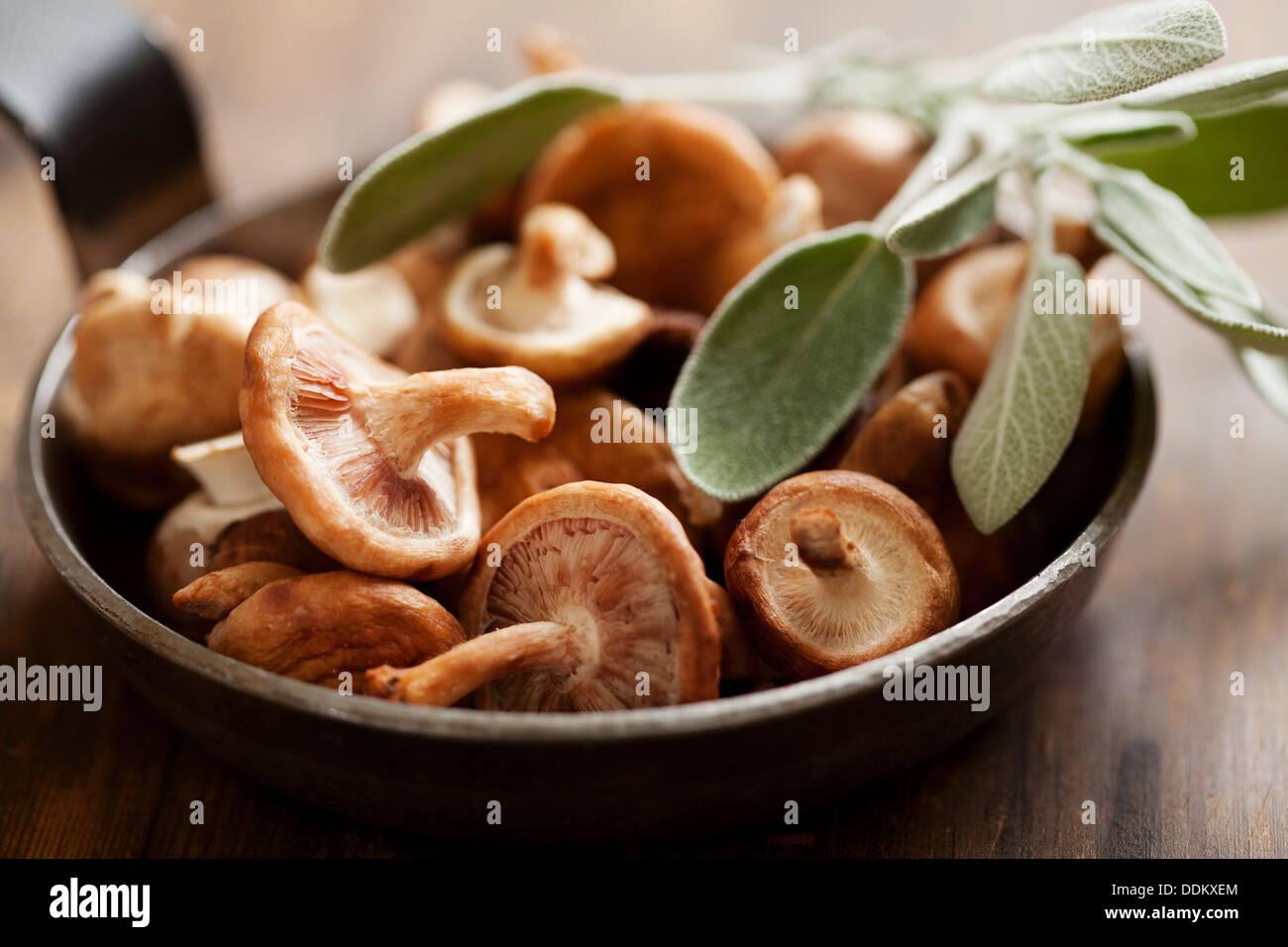 Funghi shiitake Immagini Stock