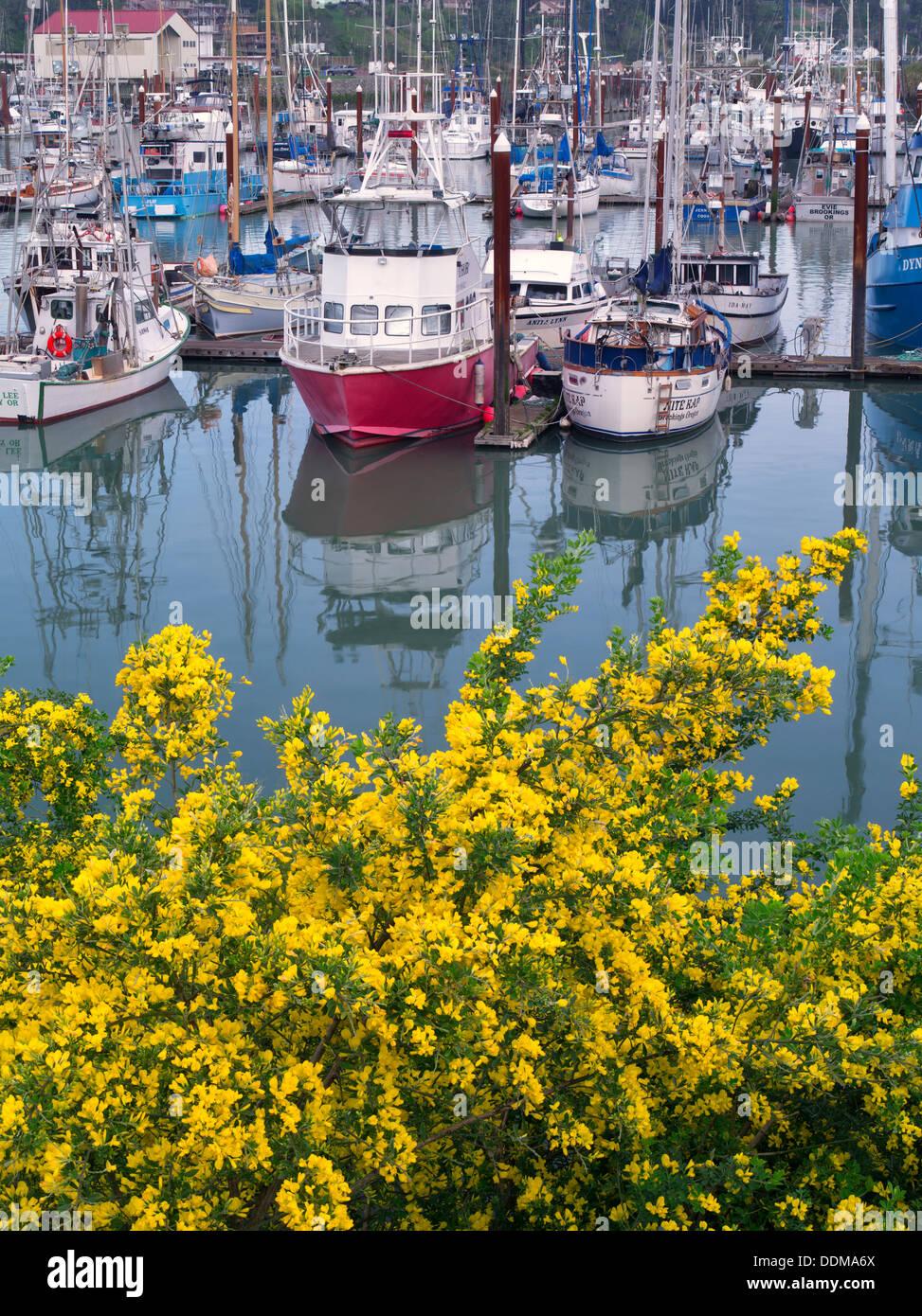 Barche da pesca e ginestre fiorite. Brookings Harbor, Brookings, Oregon. Immagini Stock