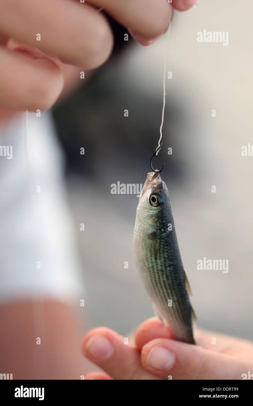 Poco pesce pescato sul gancio in bracci Immagini Stock