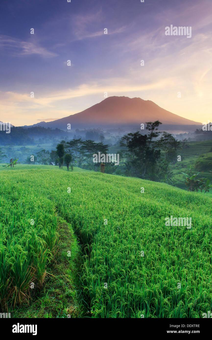 Indonesia, Bali, Sidemen Valley, Iseh, campi di riso e Gunung Agung Vulcano Immagini Stock