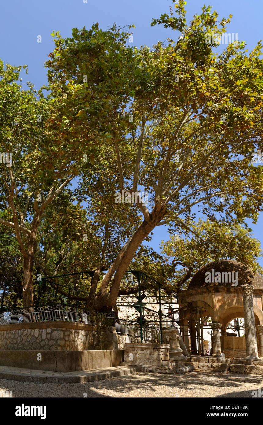 Ippocrate Plane Tree e moschea font alla città di Kos, isola di Kos, Dodecanneso Isola Gruppo, Grecia. Immagini Stock