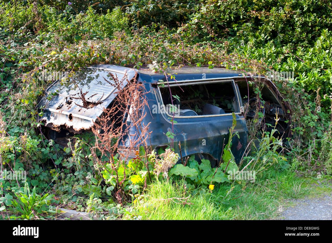 Abbandonato Austin Allegro auto nel sottobosco in Condino Devon, Inghilterra, Regno Unito Immagini Stock