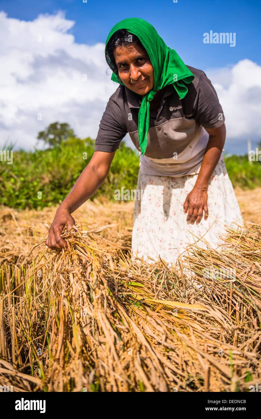Ritratto di una dello Sri Lanka donna che lavorano in un campo di grano appena al di fuori di Dambulla, provincia centrale, Sri Lanka, Asia Immagini Stock