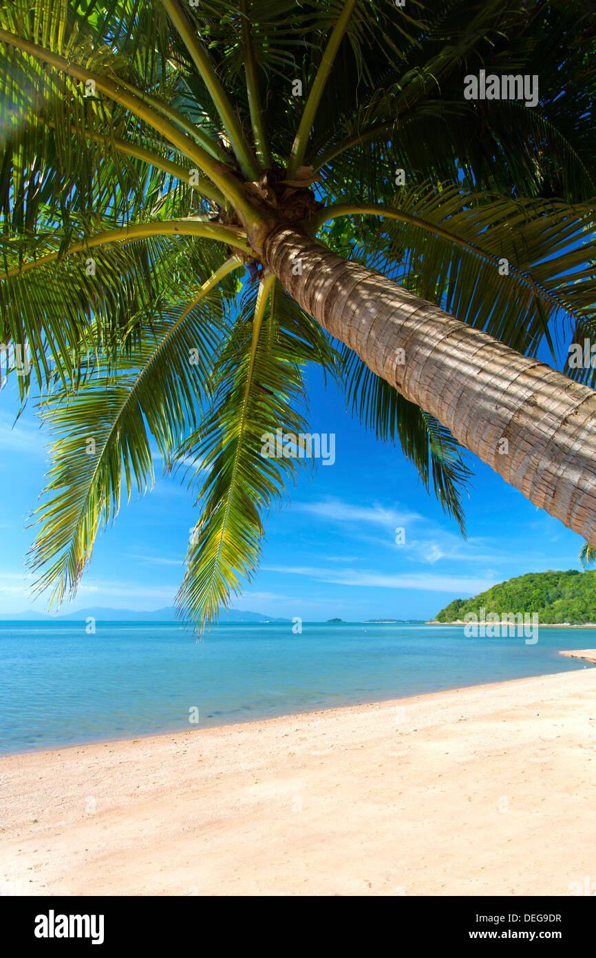 Le palme a strapiombo Bangrak Beach, Koh Samui, Thailandia, Sud-est asiatico, in Asia Foto Stock