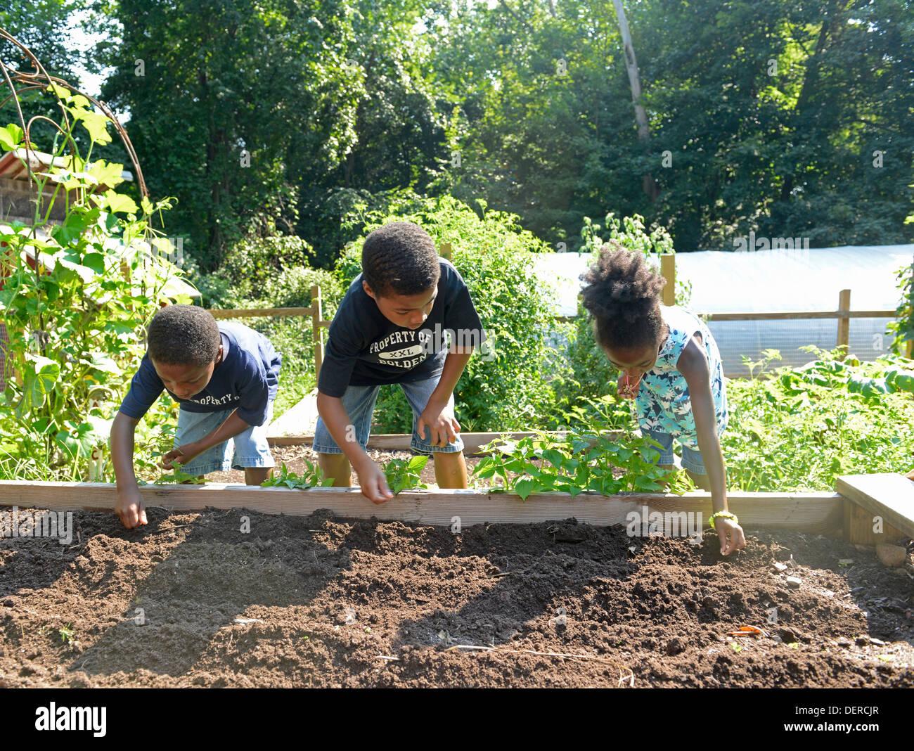 Bambini neri da New Haven pratica piantare lattuga a un terreno comune di alta scuola, una carta ambientale scuola. Immagini Stock