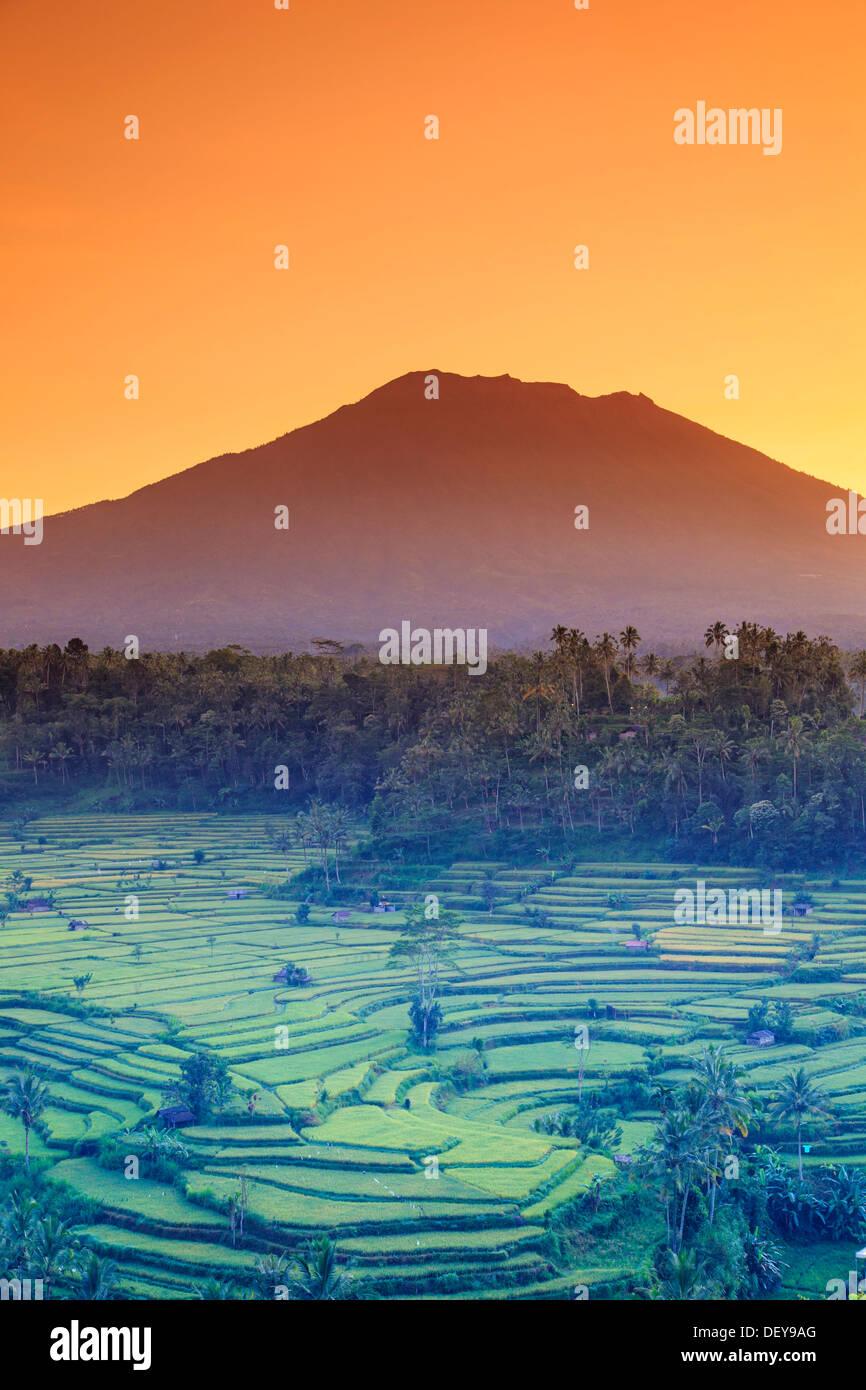 Indonesia, Bali, Redang, Vista dei terrazzi di riso e Gunung Agung Vulcano Immagini Stock