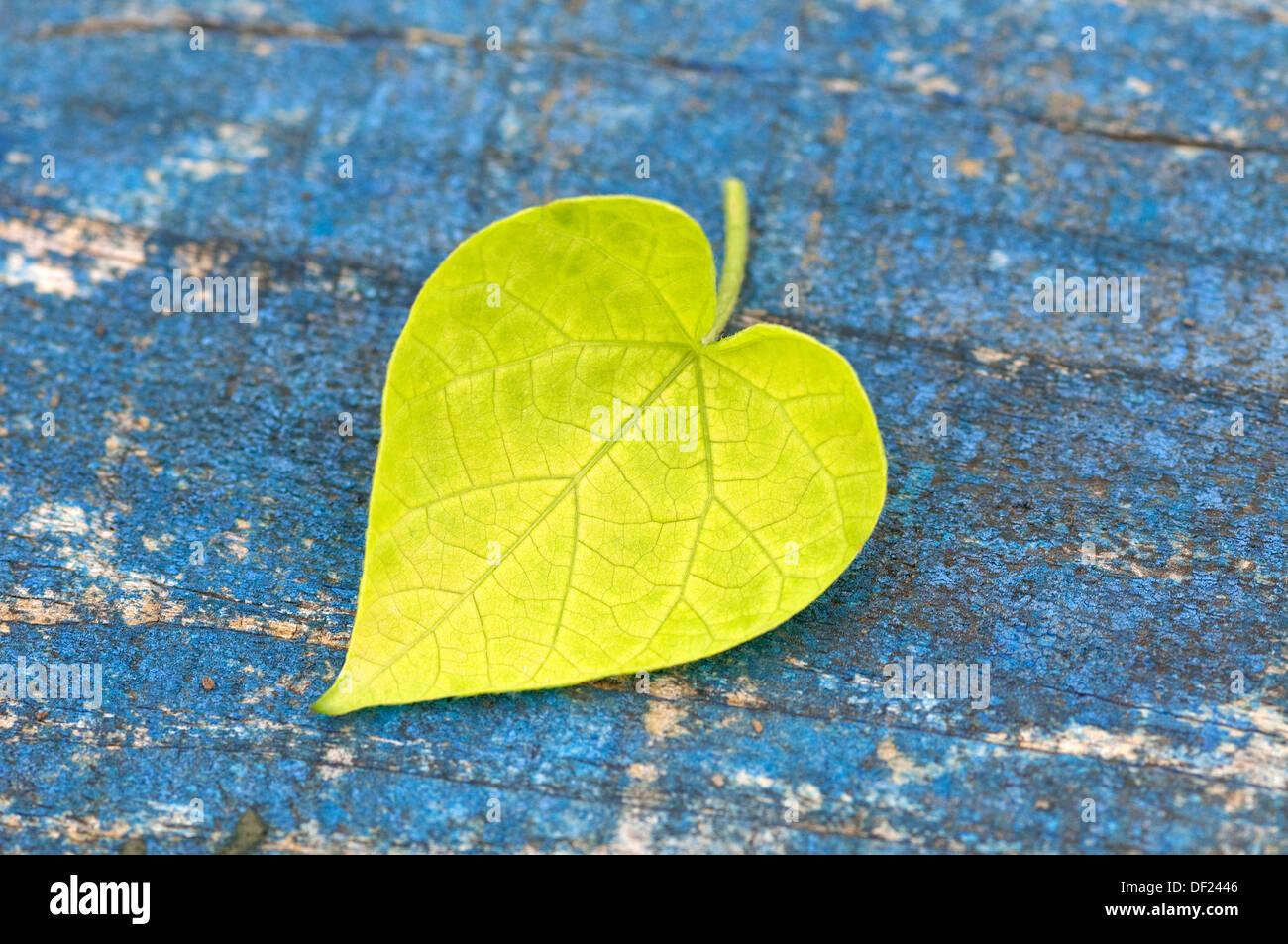 A forma di cuore a foglia verde sul legname stagionato Immagini Stock