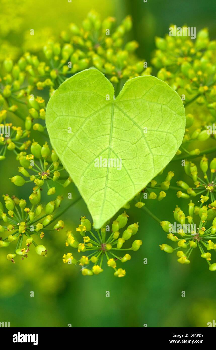 A forma di cuore a foglia verde in giardino Immagini Stock