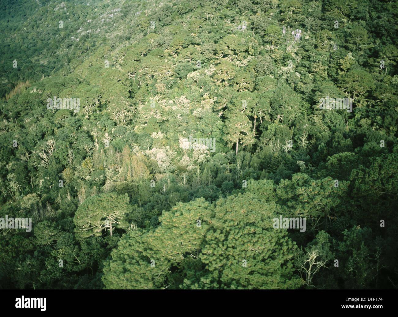 El Cielo riserva della biosfera. Tamaulipas. Messico. Immagini Stock