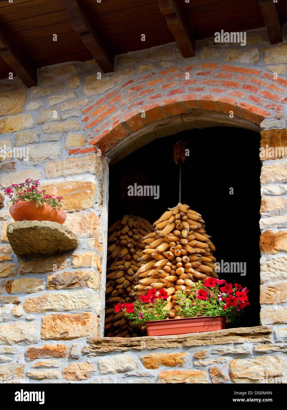 Mazzetto di pannocchie di granoturco essiccazione in ambiente rurale. Immagini Stock