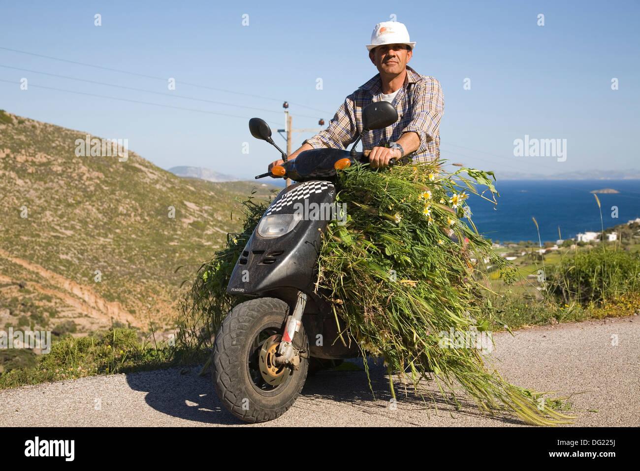 In Europa, in Grecia, Dodecaneso, PATMOS ISOLA, moto, trasporto di erba Immagini Stock
