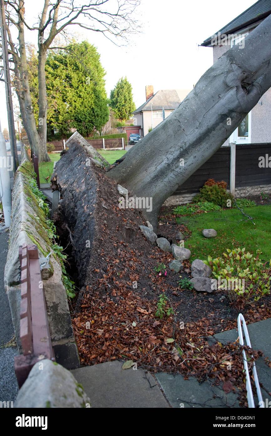 Enorme Grande Albero caduto si è schiantato a casa in tempesta di danneggiare gravemente sul tetto Immagini Stock
