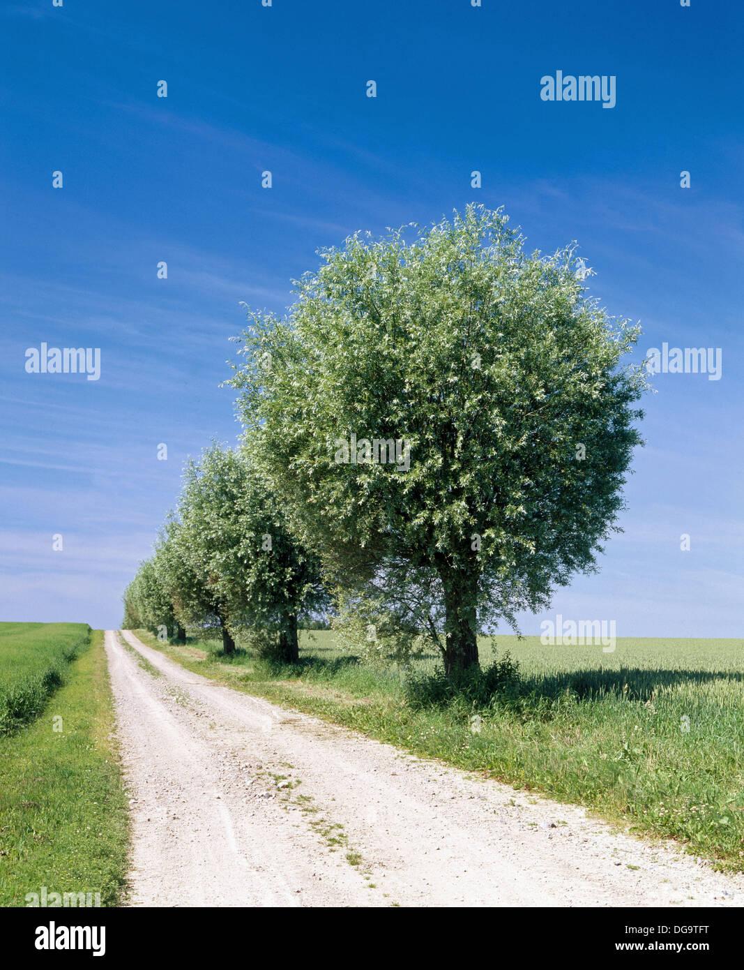 3a8fe5e16c1d Fila di alberi