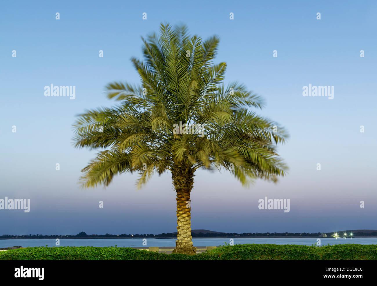 Data la struttura Palm Tree, Adu Dhabi Emirati Arabi Uniti Immagini Stock