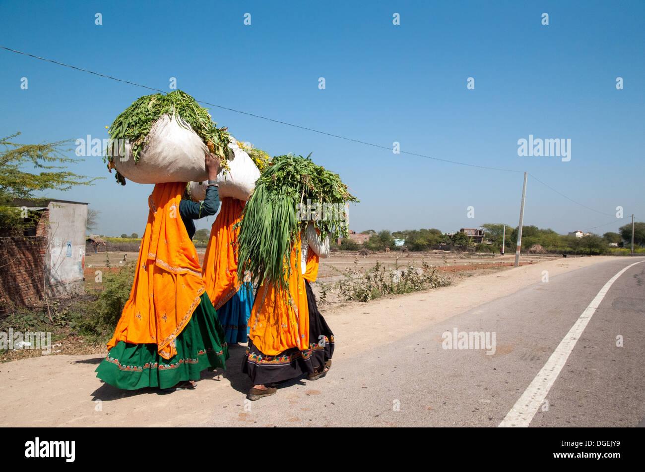 Tre colorate le donne di Rajasthani trasportare carichi pesanti. Immagini Stock