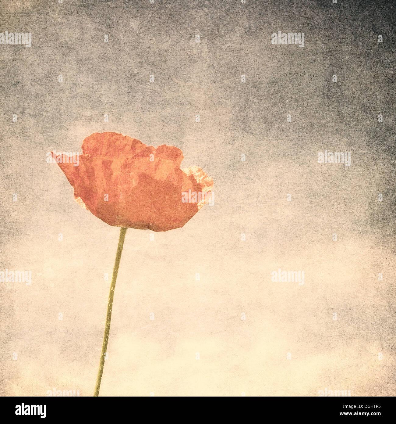Immagine vintage di semi di papavero Immagini Stock