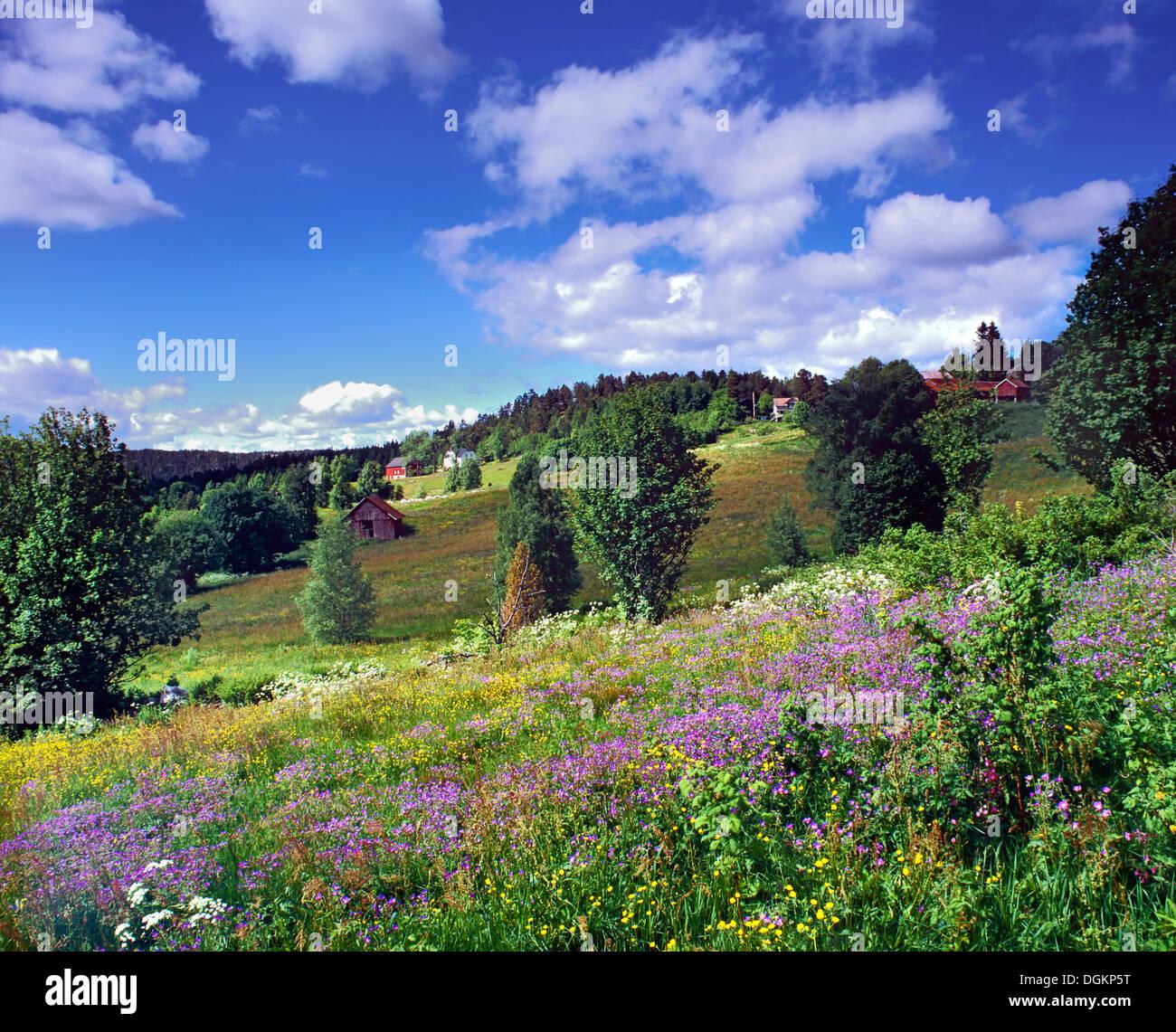 Una vista della fioritura campagna nella Norvegia meridionale. Immagini Stock