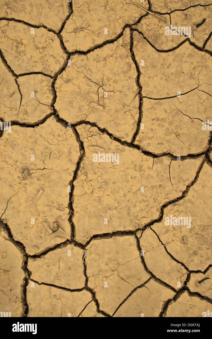 Secco, incrinato fango, immagine simbolica per il cambiamento climatico, Linz am Rhein, Neuwied, Renania-Palatinato Immagini Stock
