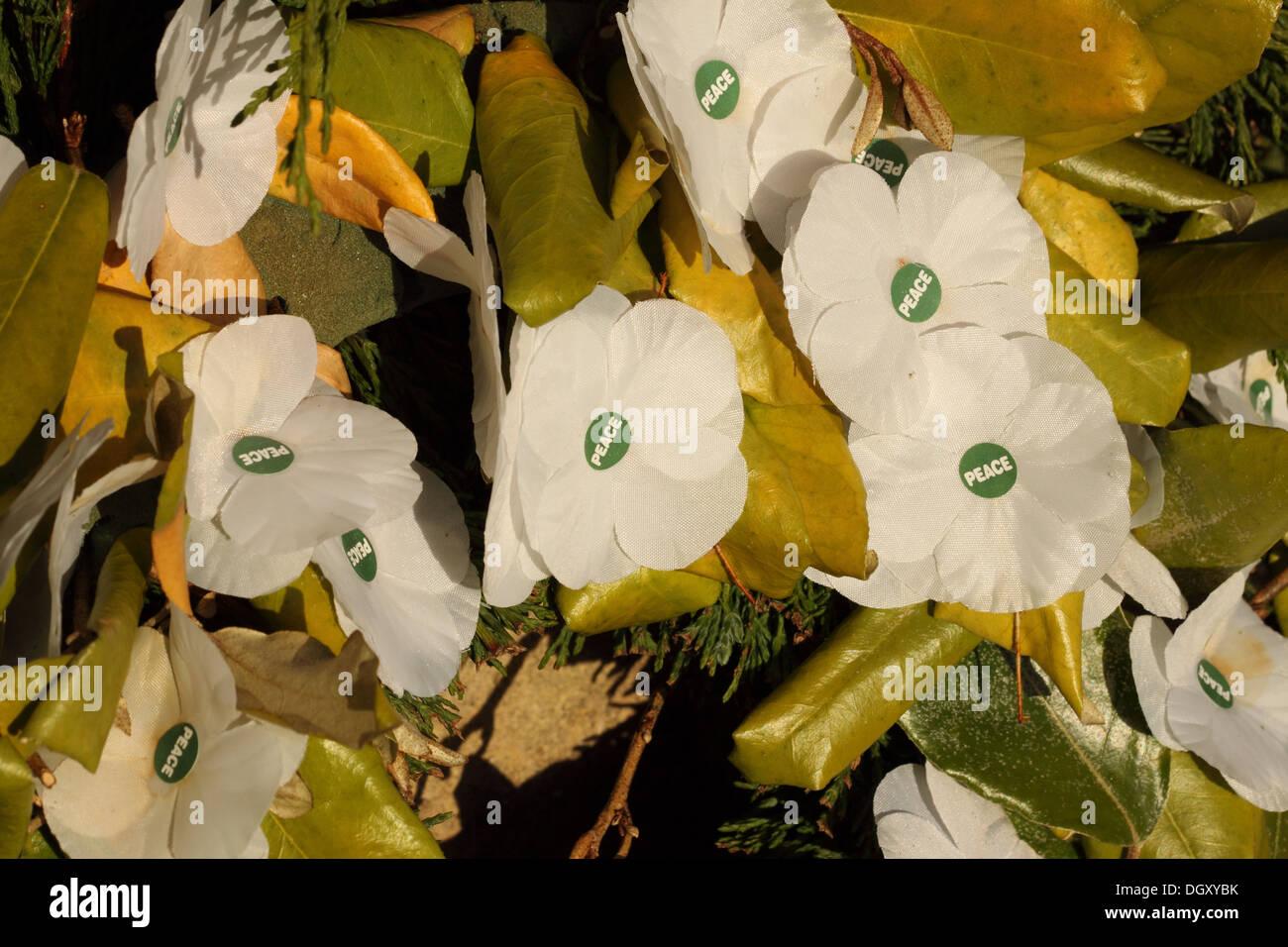 Bianco ghirlanda di papavero simboleggia la pace e il pacifismo REGNO UNITO Immagini Stock