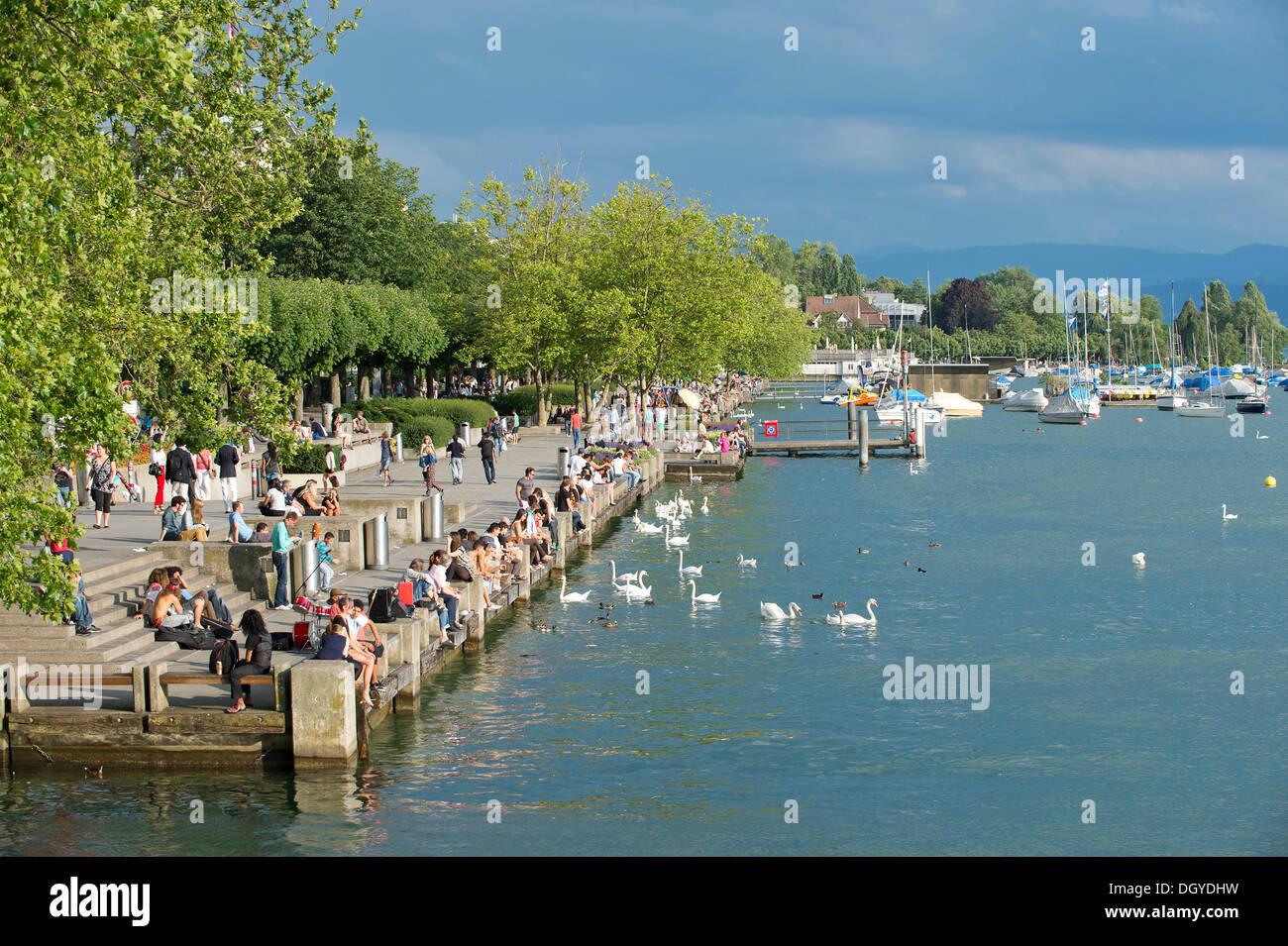 Il lago di Zurigo, Utoquai quay, Zurigo, Svizzera, Europa Immagini Stock