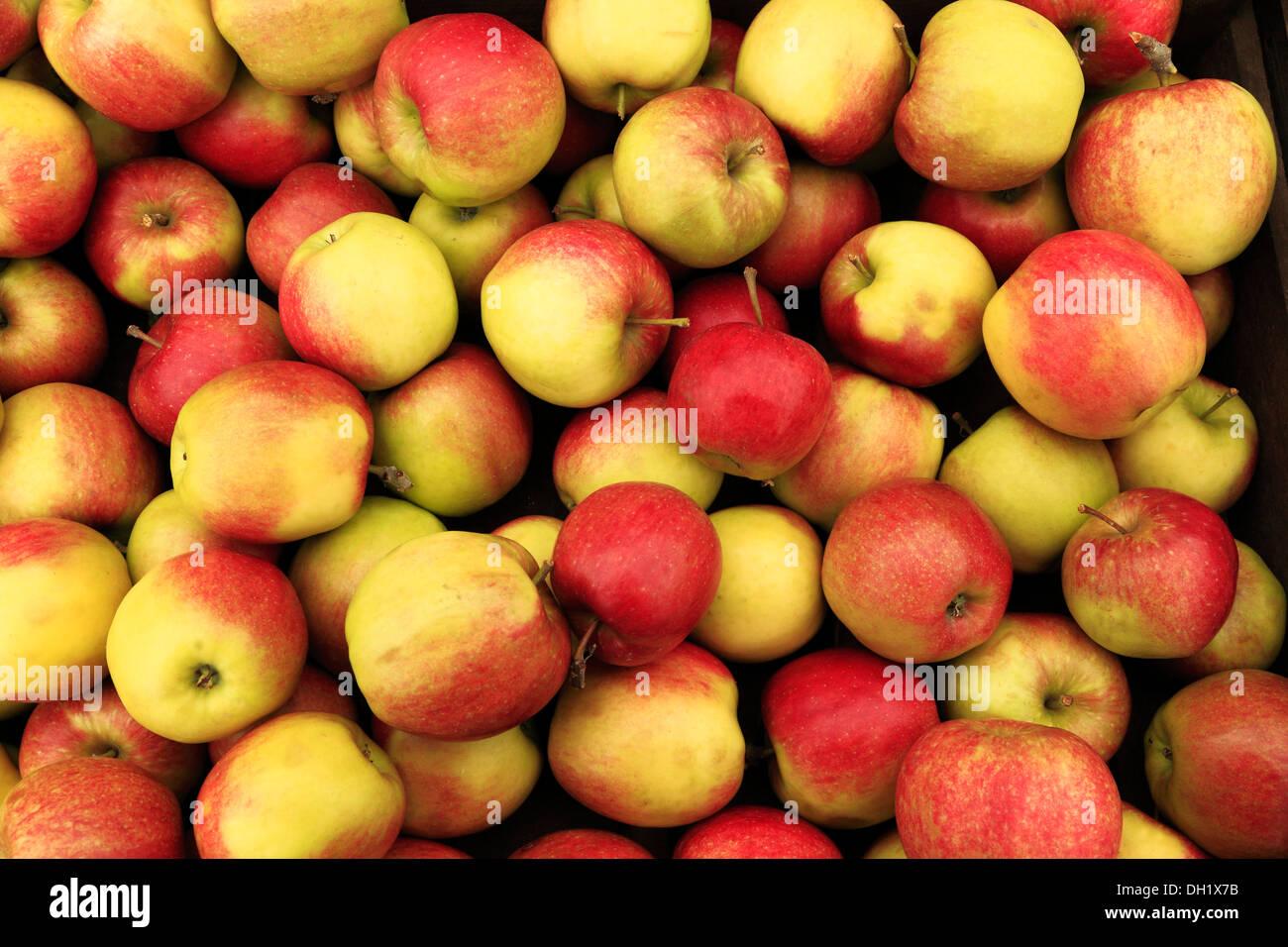 Apple 'Crowngold', farm shop display, mele REGNO UNITO Immagini Stock