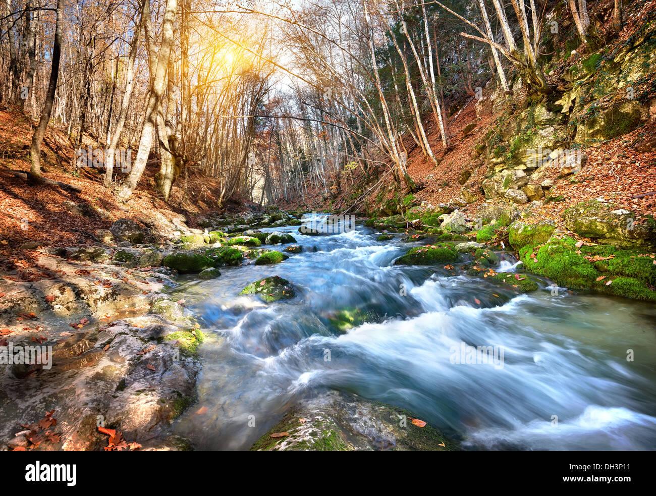Fiume rapido in una foresta di montagna in una giornata di sole Immagini Stock