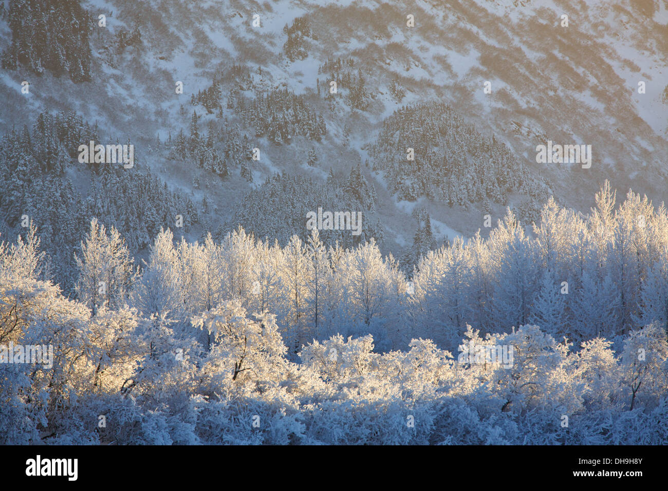 In inverno il Chugach National Forest, Alaska. Immagini Stock