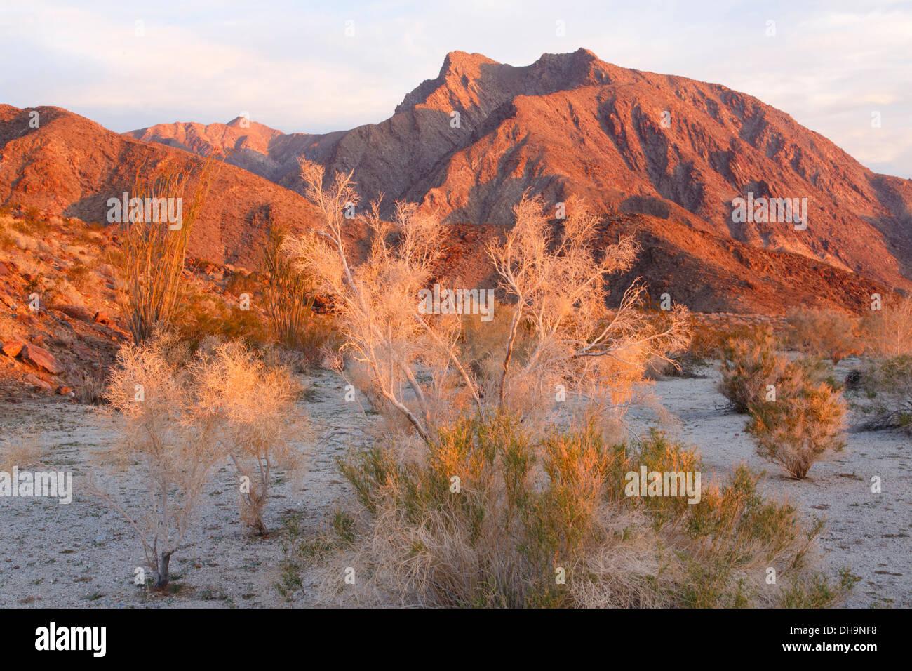 Anza-Borrego Desert State Park, California. Immagini Stock