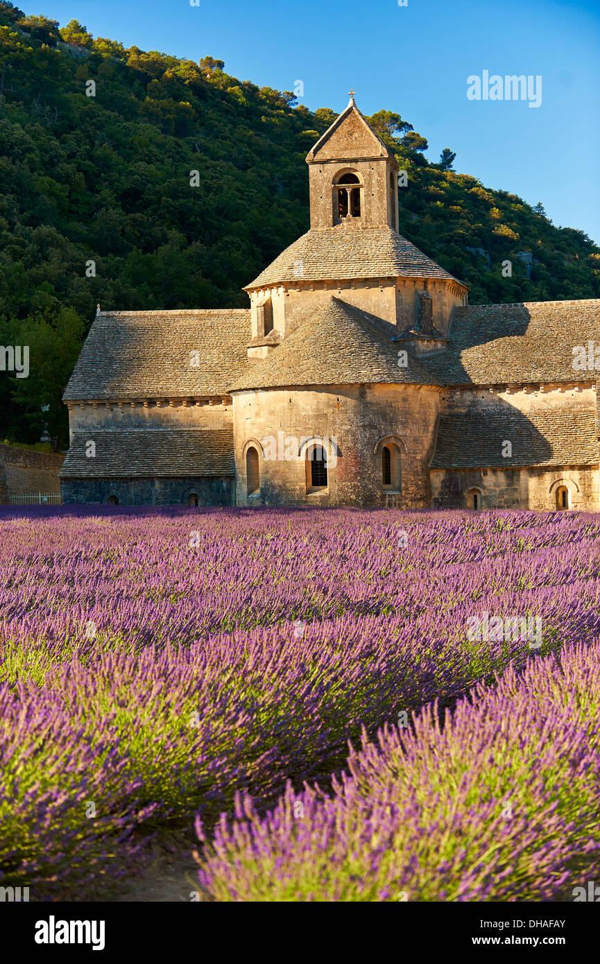 La romanica del XII secolo Abbazia Cistercense di Notre Dame di Senanque, in fioritura di campi di lavanda della Provenza Immagini Stock