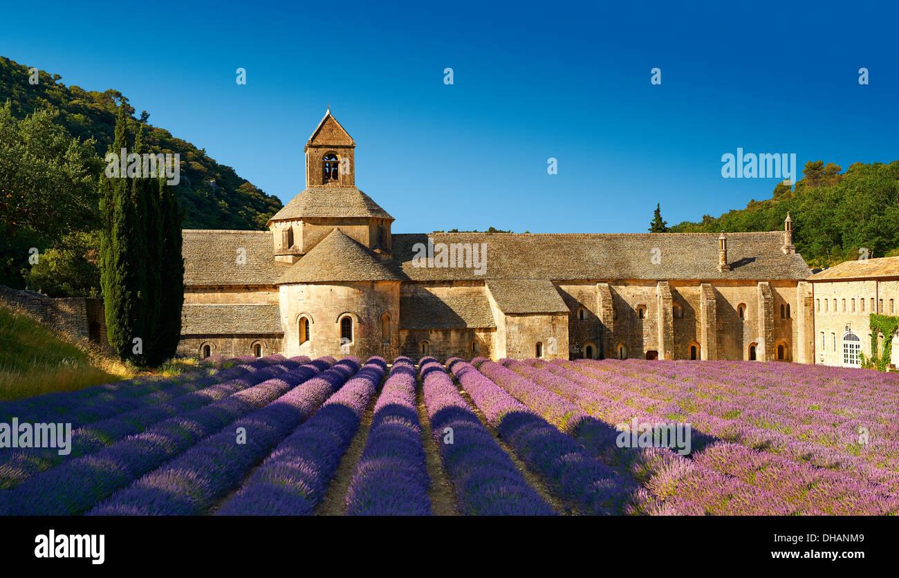 La romanica del XII secolo Abbazia Cistercense di Notre Dame di Senanque, in fioritura di campi di lavanda della Provenza. Immagini Stock