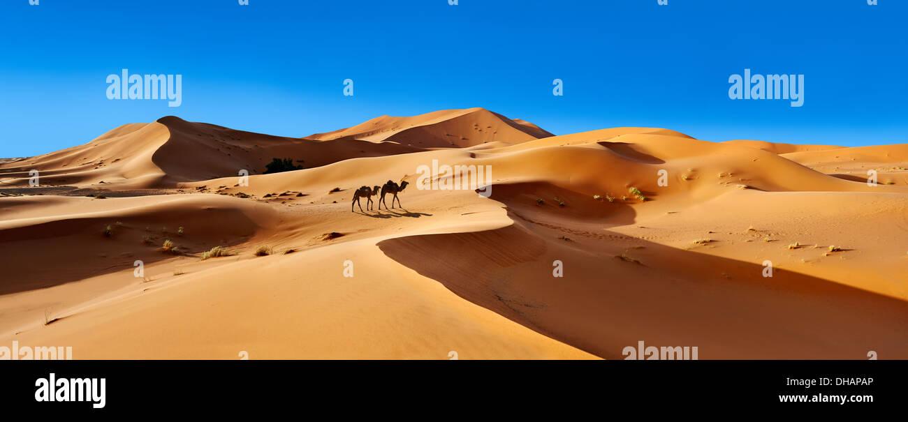 Giri in cammello sul Sahara dune di sabbia di Erg Chebbi, Merzuga, Marocco, Africa Foto Stock